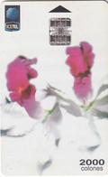 COSTA RICA - Orchids, ICE Tel Telecard, 03/99, Used - Costa Rica
