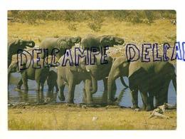 Elephants. Olifante. Etosha Pan. Afrique (Namibie) - Éléphants