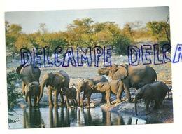 African Elephants. Olifante. S.W.A. Afrique (Namibie) - Éléphants