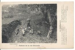 SCENES DE LA VIE CEVENOLE. LA CASTAGNADO - Trachten & Folklore