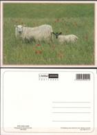 CPM Mouton Et Jeune Neuf ** - Animaux & Faune