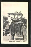 AK Baroda State Elephant, Reitelefant - Elephants