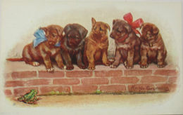 """Hunde, Mauer, Schleife, Frosch"" 1910, Sig. Mechle Grosmann ♥ (11453) - Hunde"