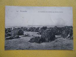 TROUVILLE SUR MER. La Cueillette Des Moules Aux Roches Noires. - Trouville