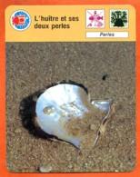 Huitre Et Ses Deux Perles  Animal  Animaux Fiche Illustrée Cousteau  N° R.1 1372 - Animali