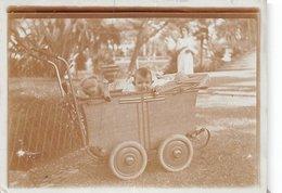 PIE.T.Z19-0092 : PHOTO. LANDAU. POUSSETTE. VOITURE D'ENFANT. OURS EN PELUCHE. JOUET PHOTO AMATEUR. FORMAT 6.5 CM X 9 CM. - Photographs