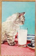 Ani150 Carte Musicale CHAT Chats Verre De Lait Music Card Cat Cats Musikalische Karte Der Katzen RHODANIA 1960s - Cats