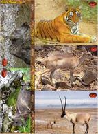 INDIA Picture Postcards: INDIA Picture Postcards: Wild India - Mammals, Set Of 48 Cards - India