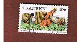 TRANSKEI - SG 10  -  1976  PICKING TEA  - USED - Transkei