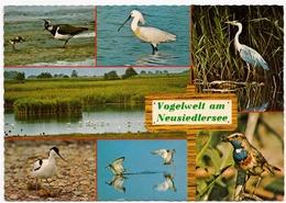 Vogelwelt Am Neusiedlersee, Austria, Used Postcard [23453] - Neusiedlerseeorte