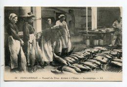 29 CONCARNEAU LL 56 Travail Du Thon Arrivée à L 'usine  Le Comptage Femmes Ouvrieres  1920    D11 2019 - Concarneau