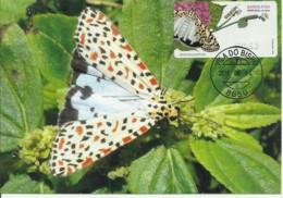 Carte Maximum - Portugal - Borboleta - Papillon - Butterfly - Utetheisa Pulchella - Timbre ATM - Butterflies