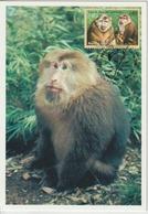 Nations Unies Genève Carte Maximum 1998 Macaque 340 - Cartes-maximum