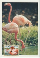 Nations Unies Genève Carte Maximum 1998 Flamant 341 - Cartes-maximum