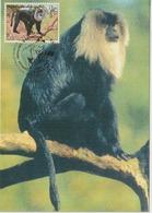 Nations Unies Genève Carte Maximum 2004 Macaque 496 - Cartes-maximum