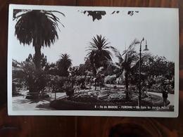 MADEIRA / MADERE, FUNCHAL, Portugal,  Un Coin Du Jardin Public , Années 40, TB Peu Courante - Madeira