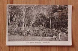 CAFERIE SOUS BOIS HIENGHENE (NOUVELLE CALEDONIE) - Nouvelle Calédonie