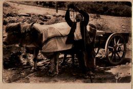 X64698 Euskadi Zahato BUVEUR Gourde Pays BASQUE Attelage Boeufs Coiffés Cpagr 1930s YOBLED DELBOY 204 - Non Classés