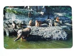 Monkeys / Catemaco   MEXICO - Apen
