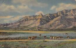 AS87 Sandia Peak And Needle, Sandia Mountains, Albuquerque, N.M. - Multiple Stamps/postmarks - Albuquerque