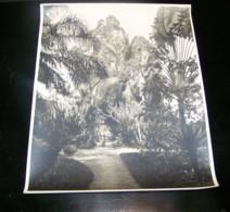 ANCIENNE GRANDE PHOTO LEOPOLDVILLE, JARDIN DE LA MAISON DE LA DIRECTION B.C.B ( BANQUE CONGO BELGE ), KINSHASA, CONGO - Afrika
