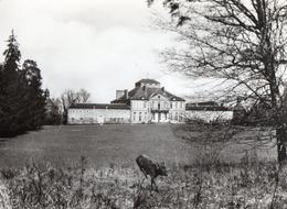 [03] Allier > Non Classés Chateau Sur Allier Le Chateau De Saint Augustin Chevreuil - France