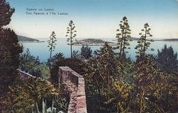 Dubrovnik (Ragusa) * Agave Na Lesini, Blumen, Festungswerk * Kroatien * AK431 - Kroatië