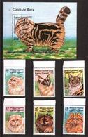 Sahara, 1999. Cats - Hauskatzen