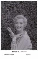 MARILYN MONROE - Film Star Pin Up PHOTO POSTCARD- Publisher Swiftsure 2000 (201/374) - Artistas