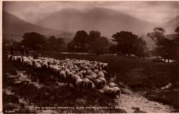 CPA - DALMALLY - MID PLEASING PROSPECTS - GLEN STRAE  ... - Argyllshire