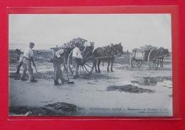 59 Dunkerque-Malo 1915 Ramasseurs De Goémon TB Animée éditeur Vve Anache N°3071 Dos Scanné - Dunkerque