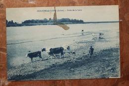 OUZOUER SUR LOIRE (45) - BORDS DE LA LOIRE - Ouzouer Sur Loire