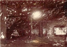 Photo 1884 - Roscoff 29 - Figuier De Roscoff, Allée Sous Les Branches - Alte (vor 1900)