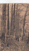 BRUXELLES / BRUSSEL / GROENENDAEL / CHEMIN DE LA SAPINIERE - Forests, Parks