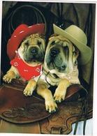 2 Chiens Avec Chapeau -dogs -honden Met Hoed -hunde- - Cani