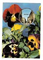 """Bedarieux- Carte Parfumée-Fragonard,""""Vallazur""""-Grasse-Fleur,pensée--(D.2482) - Bedarieux"""