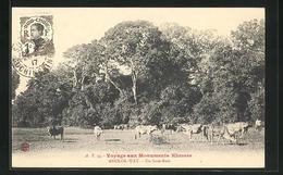 AK Angkor-Wat, Un Sous-Bois - Non Classés