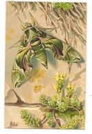 Illustrateur MILLOT- LE SPHINX DU LAURIER ROSE - Animal  Fantaisie - Papillons