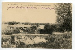 La Jemaye Domaine De Légé Le Bétail Au Paturage - France