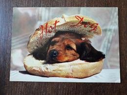 L22/505  Chien Hot Dog - Chiens