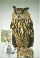 Carte Maximum - Oiseaux - Portugal - Bufo Real - Hibou Grand Duc - Eagle Owl - Bubo Bubo - Búhos, Lechuza