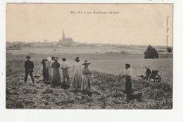 BELLOY - LES CUEILLEUSES DE POIS - 95 - France