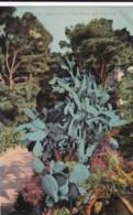 AP73 Monaco, Un Coin Des Jardins - LL Postcard - Exotic Garden