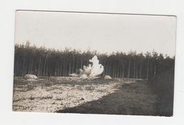 Zonnebeke - Polygoonbos - Polygon Wood  - Weltkrieg Feldpostkarte - FOTO-karte - Zonnebeke