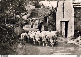 D46  LE LOT PITTORESQUE ( Postée De Gramat )  ........ Troupeau De Moutons - Autres Communes