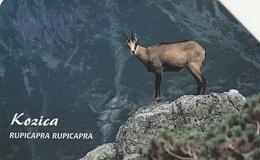 POLONIA. FAUNA PROTEGIDA. Kozica - Rupicapra Rupicapra. 25U. 1333. (018) - Tarjetas Telefónicas