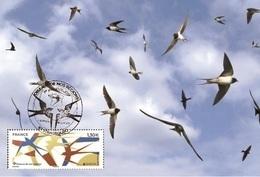 France 2019 - Europa 2019 - Les Oiseaux De Nos Régions Maximum Card - Cruz Roja