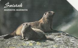 POLONIA. FAUNA PROTEGIDA. Świstak - Marmota Marmota. 25U. 1336. (020) - Tarjetas Telefónicas