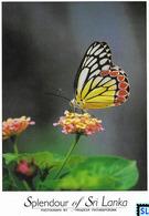 Sri Lanka Postcards, Butterflies, Common Jezebel, Postcard - Sri Lanka (Ceylon)