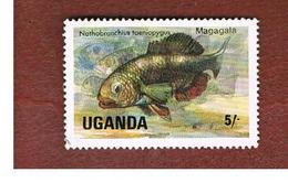 UGANDA   - SG 457   -  1985 LAKE FISHES: BLUE FINNED NOTHO      - USED ° - Uganda (1962-...)